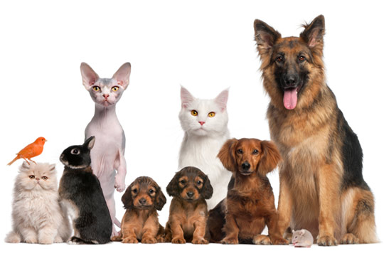 Gama Pet Shop O nama